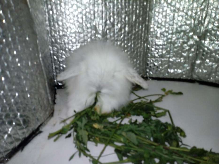 Conejos Fuzzy Lop
