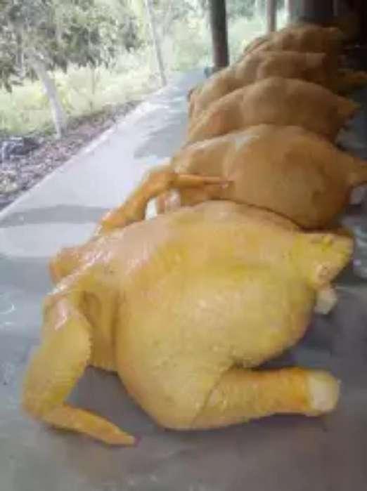 Venta de Pollo Campesino a 3800 La Libra