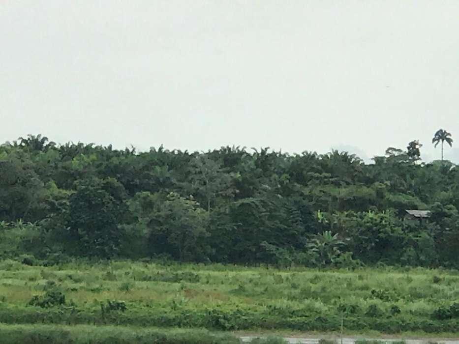 Finca de 540 hectáreas con Palma Africana en Chamanga