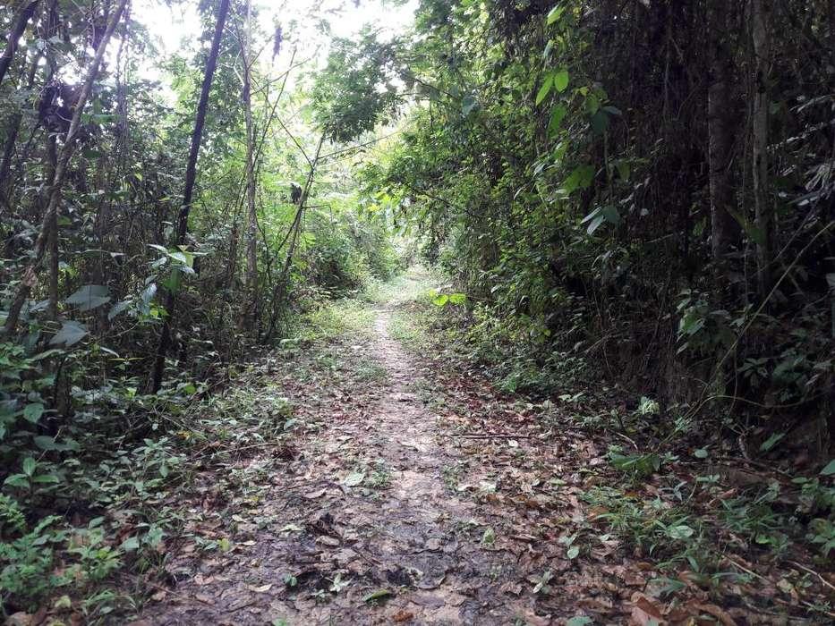 30 hectareas y 7 hectareas de Terreno TARAPOTO CHAZUTA