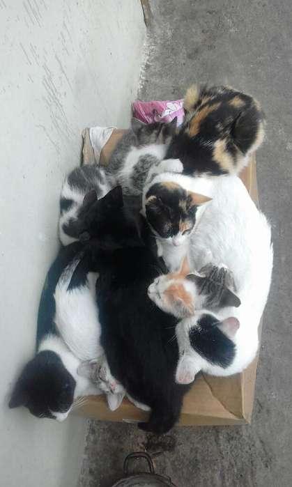 <strong>gato</strong>s en Adopcion