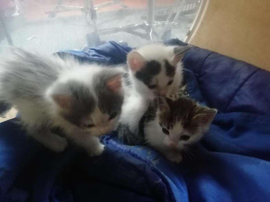 <strong>gato</strong>s para Adopción