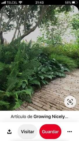 Jardinero al Instante en Bogotá