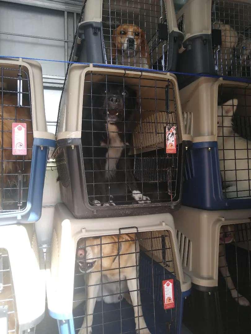 Guacales para transporte de mascotas IATA todos los tamaños. Pet 300