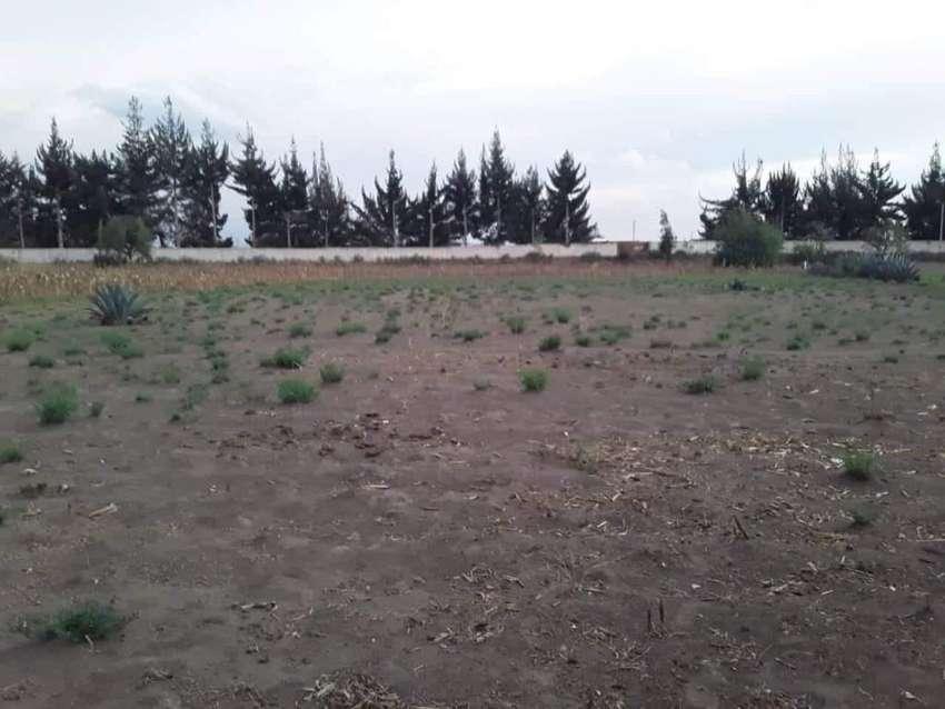 Vendo 1 hectarea de terreno 0993944786 0