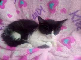 Hermosa gatica en adopcion