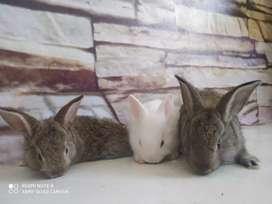 Bellos conejos
