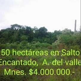 25 has en venta- Salto encantado, A del Valle, Mnes