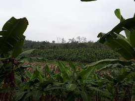 Vendo Finca Plátano de Exportación