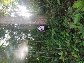 Terreno cerca de Tarapoto de 15 hectareas abundante agua a dos horas y media de Tarapoto por carretera asfaltada