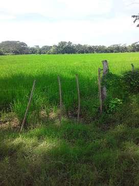 Vendo finca de 20 hectareas frente al Vizo.