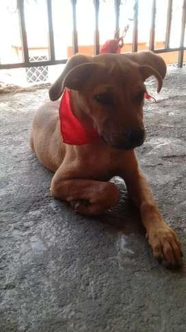 Adopcion perra