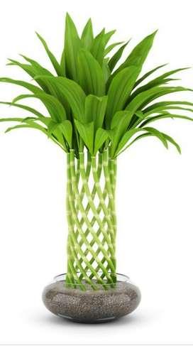 Decorados en Bambú