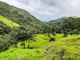 En venta Finca de 17 hectareas en Loja