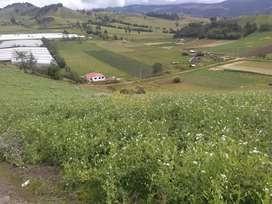 FINCA AGROPECUARIA . OPORTUNIDAD