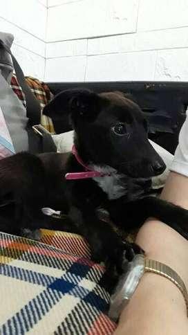 Perrita cachorra negra necesita un hogar urgente