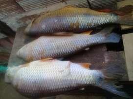 Vendo pescado