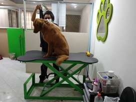Mesa para peluquería canina eléctrica