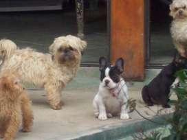 pensionado canino 400 pesos x dia...