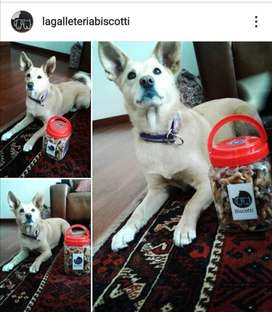 galletas naturales para perros y gatos