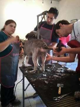 Cursos de Peluqueria Canina en Bahia Blanca