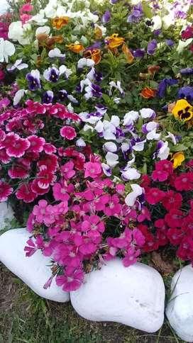 Necesito jardinero para Jardin y quinta