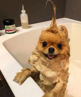 peluquera / o canino