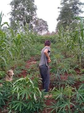 Terreno de Venta, apto para cualquier cultivo