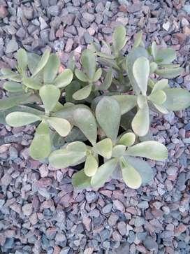 Vendo plantas de jardín