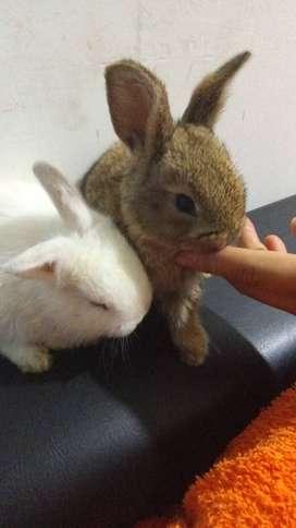 Venta dos conejos