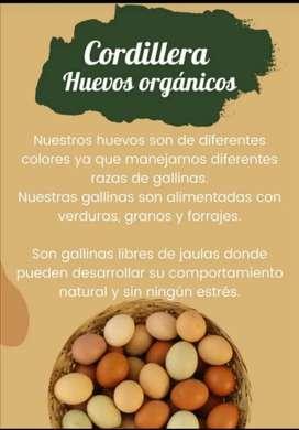 Huevos criollos