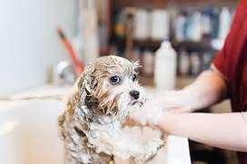 se necesita peluquer@ canino