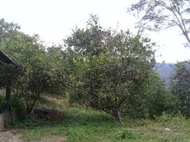 Vendo Terreno Agrícola 15 Hectáreas-San Luis de Shuaro