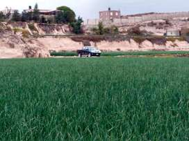 se vende 54,000 m2 terreno agrícola a 5 minutos de la evitamiento