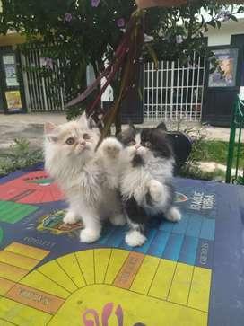 Hermosos gatos