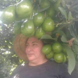 Vendo Finca