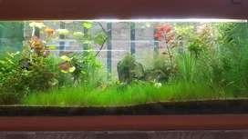 Plantas Sustrato Y Mas