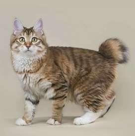 Venta de hermosos gatos .