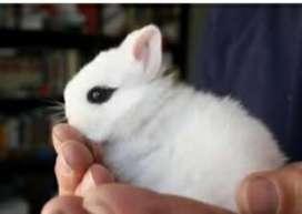 Conejos de fantasía