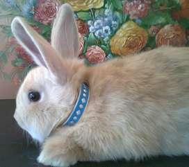 Collares y Correas Retractiles Importadas Para Conejos en Bogotá y envíos Nacionales