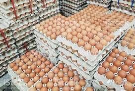 Distribuidores de de huevos