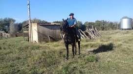Vendo caballo oscuro