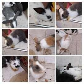 Venta de conejos de todas las razas mas informacion whatsaap
