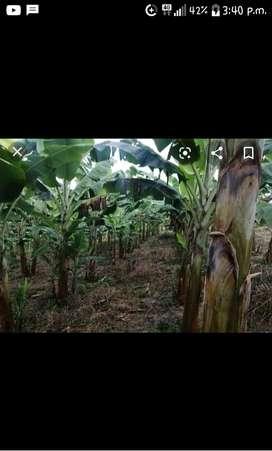 Terreno agricola.