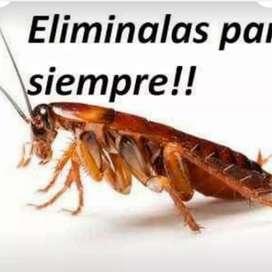 Exterminacion de cucarachas