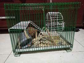 Jaula de Hamster *Domicilio solo en Cali*