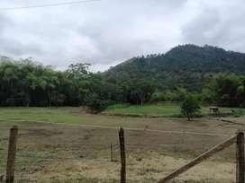 FINCA  de 25 hectáreas