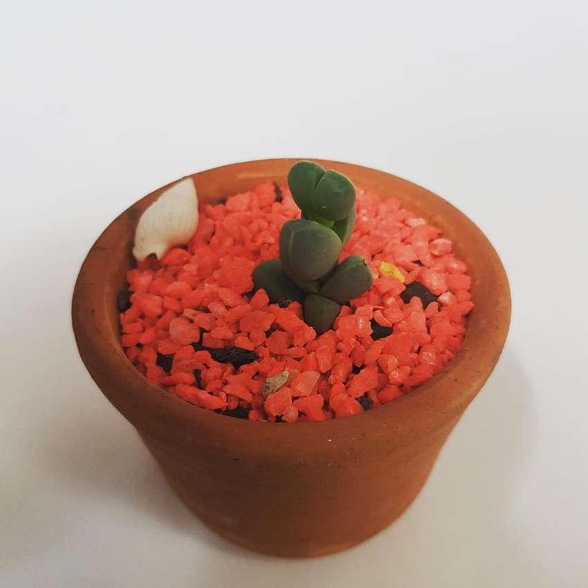 Cactus Y Suculentas Barranquilla 0