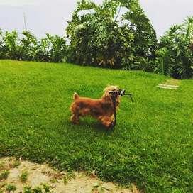 Guardería canina Campestre lulo por días semanas y mes con descuento del 7 % tu peludo queda en buenas manos visítanos