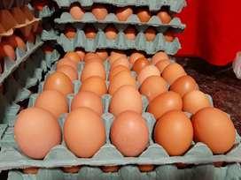 Huevos por mayor de granja!